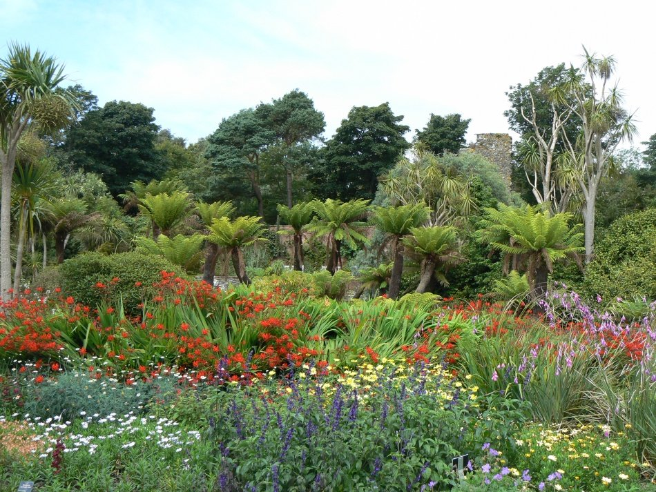 Discovering Scotland's most exotic garden - Logan Botanic Garden